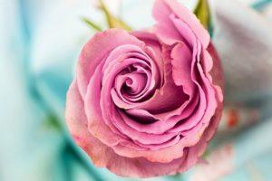 7 utilisations de la rose bonne pour votre santé