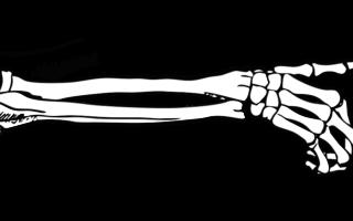 Os du bras