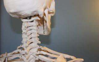 Les os du corps humain : type, tissu, densité…